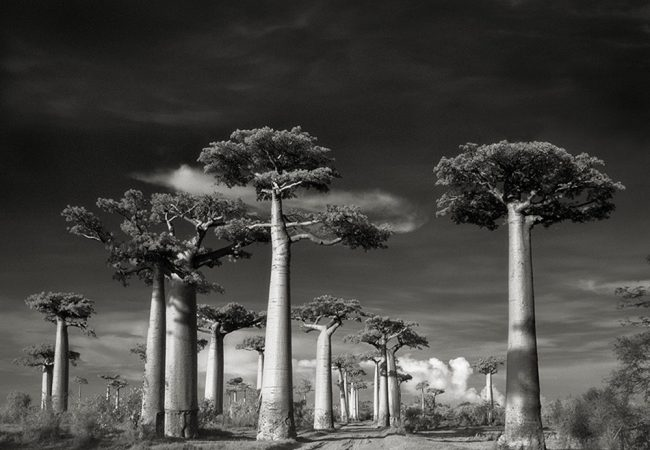 Book Review: Ancient Trees: Portrait of Time