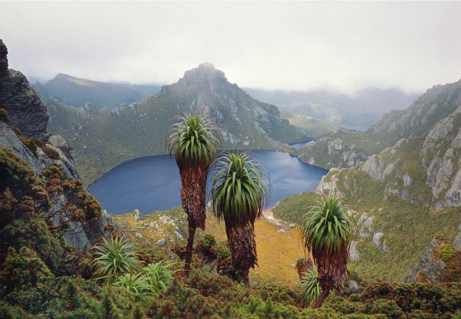 Exhibition: Journeys into the Wild – Peter Dombrovskis