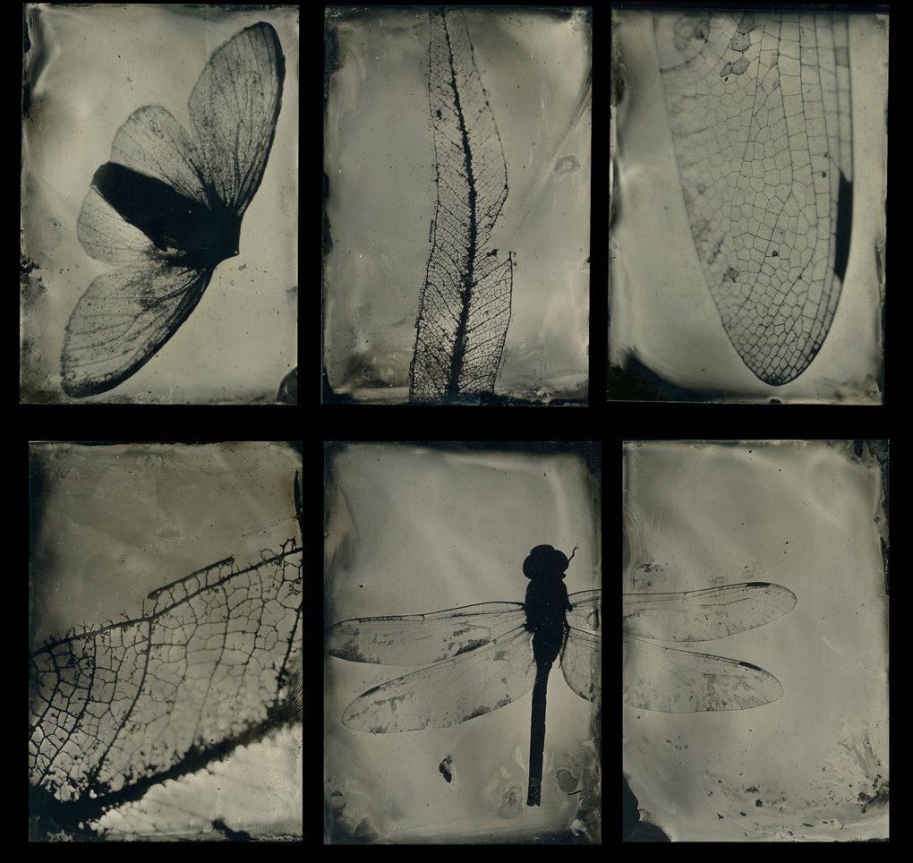 Exhibition: Natura – Rachel Mounsey