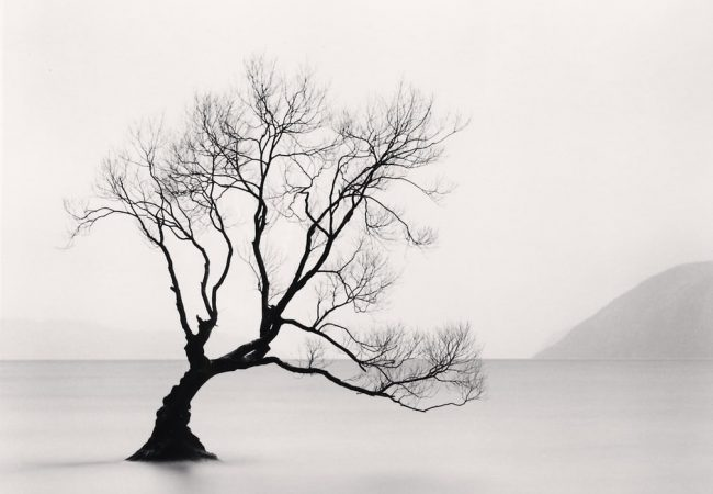 On line exhibition: Michael Kenna – Philosopher's Tree