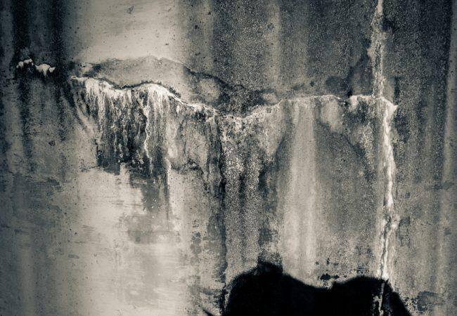 Exhibition: Look – Anne Lynam