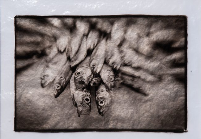 Exhibition: The Print Exposed 2019