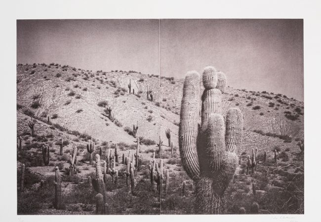 Exhibition: In the Shade of a Cactus – Silvi Glattauer