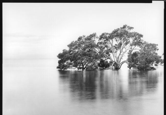View Camera Australia: Online exhibition August 2021